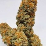 Mz Jill Genetics – Jokers Wild 5 Pack